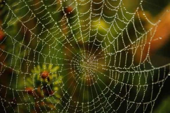spider web pic